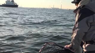 東京湾 ヘヴィーバイブレーションで釣る秋の良型シーバス(後編)