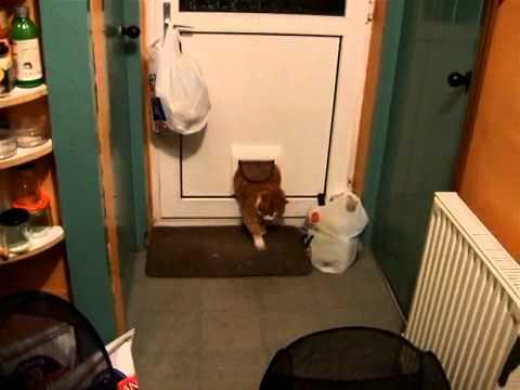 il-gatto-troppo-grasso-che-non-riesce-a-passare-dalla-sua-porticina-144