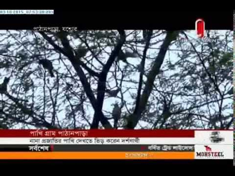 Find birds chirping at Pathanpara (03-10-2015)