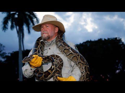 Florida zahlt ein Kopfgeld für jeden Python