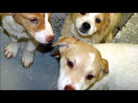 Pet Adoption - Lynchburg and Roanoke, Virginia