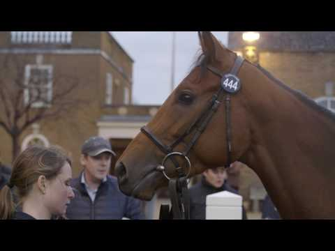 Tattersalls February Sale Day 2 2017