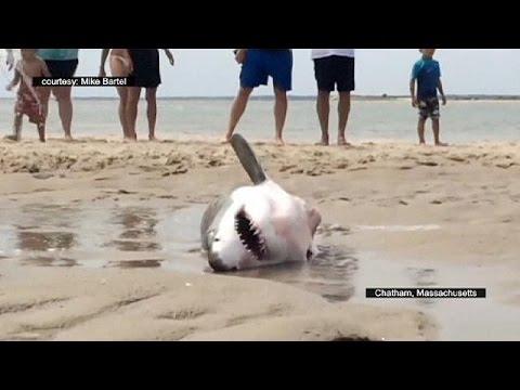 ΗΠΑ: Διάσωση λευκού καρχαρία