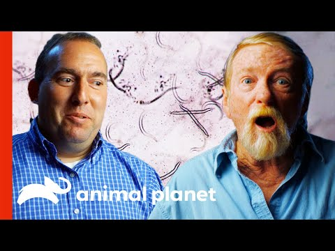 Living Creatures Crawled Inside Our Bodies | Monsters Inside Me
