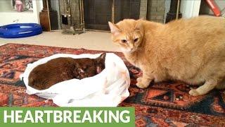 Przyjaciel tego kota zmarł na raka. Obejrzyj co zrobił, kiedy pani pozwoliła mu się z nim pożegnać.