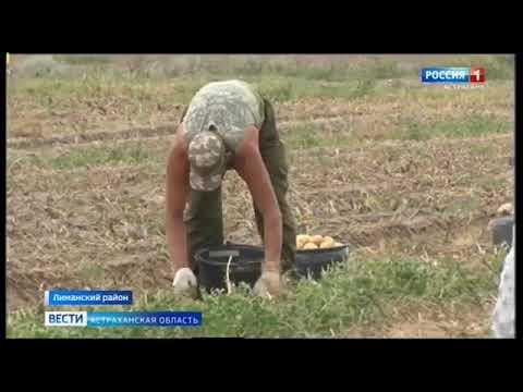 Управлением Россельхознадзора проведен мониторинг карантинного фитосанитарного состояния территории Астраханской области
