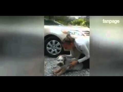 impressionante: cagnolino sviene quando rivede dopo anni la sua padrona
