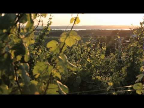 Wineries - A Pure Michigan Summer