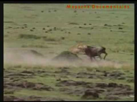 Africa - El Serengeti (en español) P1