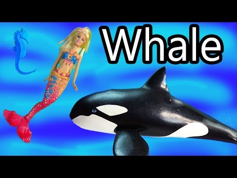killer - SUBSCRIBE: http://www.youtube.com/channel/UCelMeixAOTs2OQAAi9wU8-g?sub_confirmation=1 A beautiful Barbie mermaid wants to make friends. Soon a seahorse alerts her that an orca (killer ...