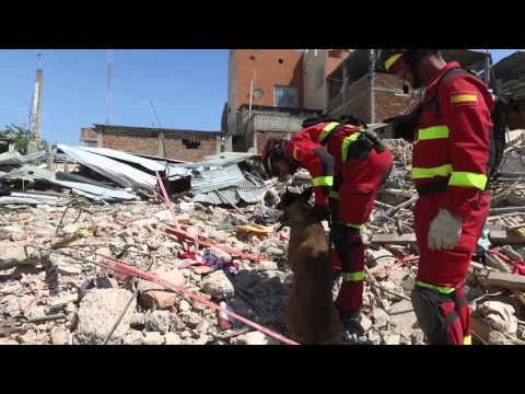 VIDEO – Trabajar con perros para la búsqueda de desaparecidos durante un terremoto (Ecuador)