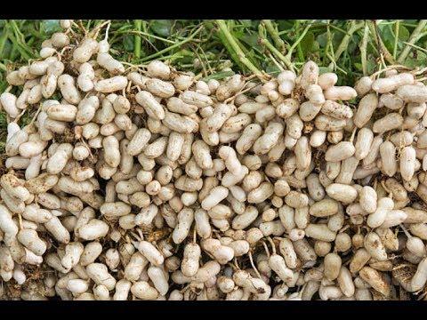 The health benefits of Peanut oil