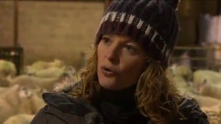 Lambing Live 2014, Series 3 Episode 3Kate Humble and Adam Henson continue to get their hands dirty helping the Dykes family with lambing on their farm in the Scottish Borders. Kate discovers that ultrasounding sheep can be a surprisingly mucky business, while Adam heads to Cyprus in search of the mouflon, an ancient wild sheep that is as rare as it is elusive. Plus there are the latest live updates on all the new arrivals.