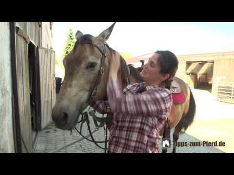 Pferd auftrensen: Mit Western-Trense aufzäumen
