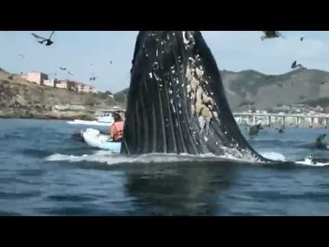 кит прыгнул на лодку