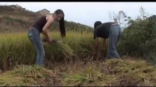 [Laj Tsawb Movie | 邹兴兰的电影] - Rov Qab Los Kuv Niam (回来吧妈妈) - Daim 1 Part 2