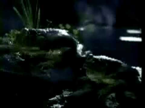 Original Budweiser Frogs Commercial