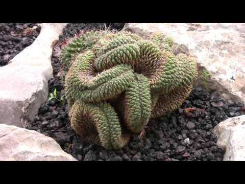 Jard n bot nico de soller for Jardin botanico soller