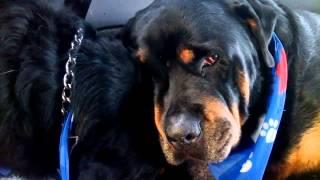 Cachorro chora ao perceber morte de irmão