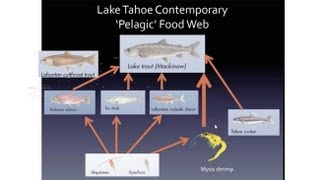 Open Water Food Web Dynamics In Lake Tahoe