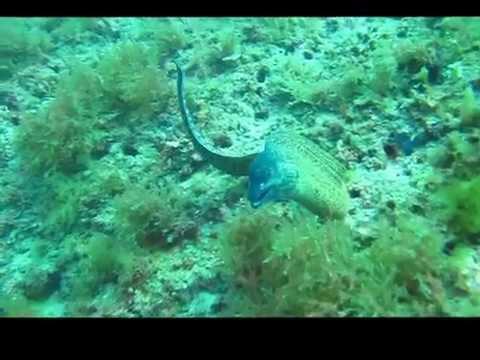 The Islas Hormigas Marine park . Spains Best Diving!!