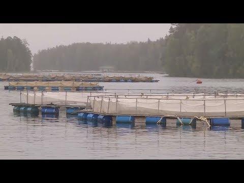 Концепция развития агропромышленного и рыбохозяйственного комплекса Республики Карелия до 2025 года