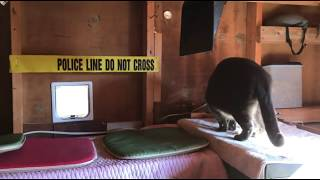 Mokie Cat Violates Crime Scene Tape - Warrant Issued For His Arrest