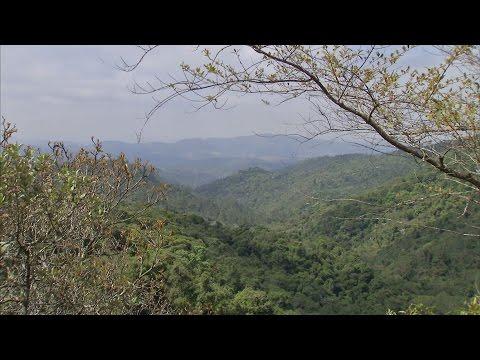 Um passeio pela reserva biológica da Serra do Japi