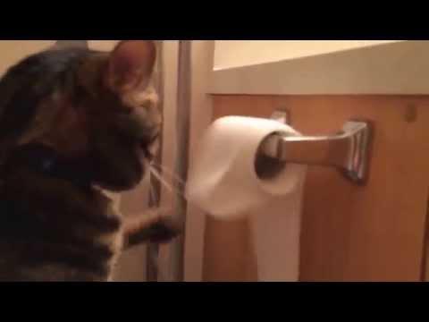 gatto srotola la carta igienica ma poi la rimette a posto