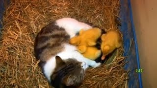 Meet Della and her 'yellow kittens' :)