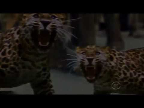 Zoo Season 2 (Promo 'The Threat has Evolved')