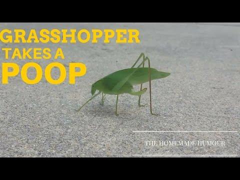 男子意外拍到葉蟲在上大號!超不可思議的便便方法讓我的生命又更完整了一點...