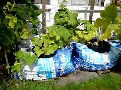 Container Vegetable Gardening | Introduction to my container vegetable gardening