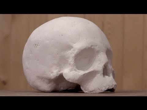 Laser Tutorial: 3-D Human Skull by David Picciuto