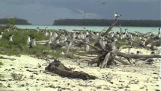 Tetiaroa is an atoll in the Windward group of the Society Islands of French Polynesia. The atoll is located 33 miles (53 km) north of...