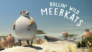 Video ROLLIN' SAFARI - 'Meerkats' - what if animals were round? MP3, 3GP, MP4, WEBM, AVI, FLV September 2019