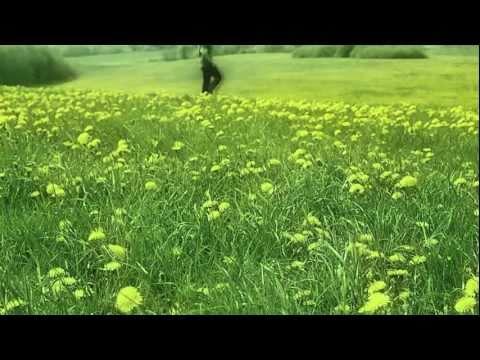 SINE - Spring Awakening