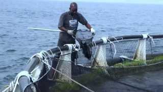 Cartagena, 17 jun (Colombia.inn).- (Imágenes: César Cácua/ Ricardo Maldonado) La pesca con la tradicional atarraya ya es...