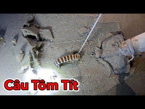 Lâm Vlog - Câu Tôm Tít Tại Biển Vũng Tàu | Catch Mantis Shrimp - Thời lượng: 16:01.