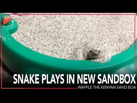 Video Snake Plays in New Sandbox download in MP3, 3GP, MP4, WEBM, AVI, FLV January 2017