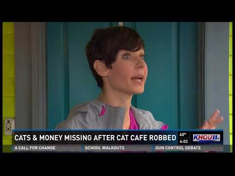 Popular Cat Cafe Robbed In North Houston