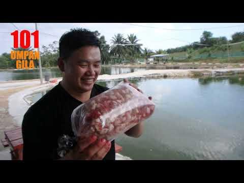 Minyak Peram Umpan Ikan Patin l Matsumoto Power Bait B125 Badam Plus