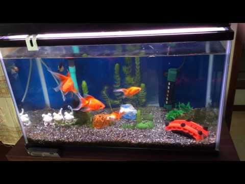琉金 我が家のカワイイ金魚達 60cm水槽