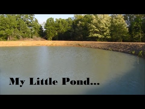 Pond Clearing & Stocking Hybrid Bream