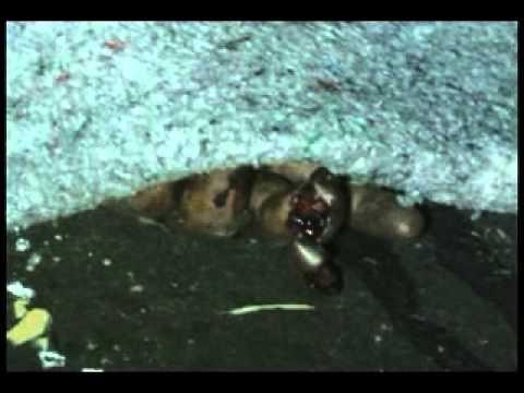 Dois morrem na serra do Tombador em Diamantino.wmv