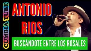 ANTONIO RIOS - Buscándote Entre Los Rosales