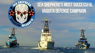 Video Operation Milagro IV: Sea Shepherd's Most Successful Vaquita Defense Campaign MP3, 3GP, MP4, WEBM, AVI, FLV Agustus 2018