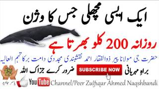 Ek Asi Machli Jis Ka Wazan Rozana 200 Kg Peer Zulfiqar Ahmed Naqshbandi►  Facebook:   https://www.facebook.com/Peer-Zulfiqar-Ahmed-Naqshbandi-1872502923019464/►  Google+:    https://plus.google.com/u/0/109262388981676397825►  Click to see all our videoshttps://www.youtube.com/channel/UC5x4uAW4GJvt2qIfm5OqbFw/videos very difficult to make contact with Hazrat ji, but it is possible if you travel to Hazrat ji's place or contact they'll guide youBiographical Sketch of Shaykh Zulfiqar Ahmad damat barakatuhumEducational Curricular Activities:Matric 1st Division in 1967BSC 1st Division from Punjab in 1971Roll of Honor in 1971BSC Electrical Engineering 1st division in 1976Special Honors in Computer Project 400/400Management Course in 1976Effective Management Course MAP in 1990Strategic Management Course (LUMS) in 1990Short Course in Library Science (LUMS) in 1990Project Management Course from Sweden in 1990Human Resource Management Course (LUMS) in 1991etc...Extra Curricular Activities:Dialogue Best Performance in 1963Best Scout of School in 1965Best Performance in Gymnastic in 1966Captain of School Cricket Team in 1967Captain of District Football Team in 1968Champion of College Swimming Team in 1971etc...Economic Activities:Apprenticeships Electrical Engineering in 1976Member of Pakistan Society of Sugar Technologist in 1977Assistant of Electrical Engineer in 1978Electrical Engineer in 1979Member of Pakistan Engineering Council in 1979Chief of Electrical Engineer in 1982Won Gold Medals to Dissertation Writing in PSST in 1984Senior Member of Instrument Society of America in 1984General Manager Planning in 1991Participation in Asia Chemical Instrument Conference Singapore in 1991etc...Religious Activities:Hafiz of Qur'anAcquisition and Teaching of Islamic Education 1962-1982Dora e Hadees (Honorary Degree) from Jamia Rehmania Jahanian Mandi PakistanDora e Hadees (Honorary Degree) from Jamia Qasim ul Uloom Multan PakistanBayt in Silsila e Aaliya Naqshbandia in 1971Caliphate (K