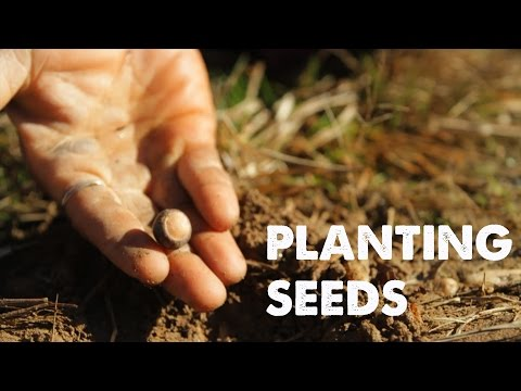 Video PLANTING SEEDS: A Song of Life | Empty Hands Music | nimo feat. daniel nahmod download in MP3, 3GP, MP4, WEBM, AVI, FLV January 2017