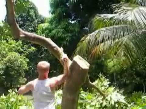 madwhitejamaican VS ackee tree